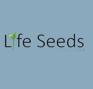 Life Seeds Counselling